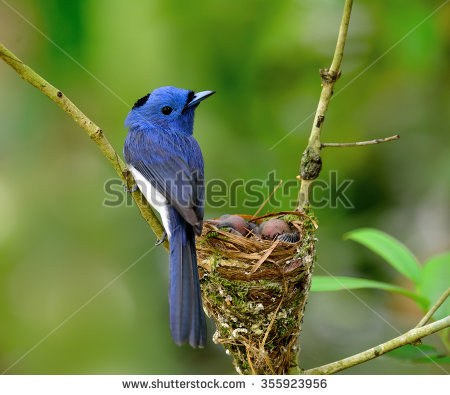 Black-naped Blue Monarch clipart #17, Download drawings