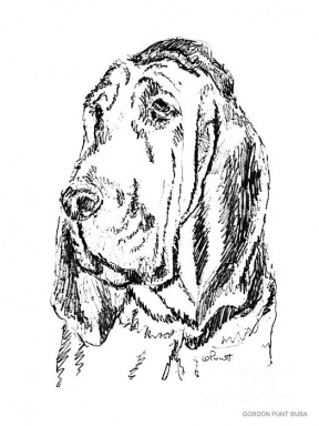 Bloodhound clipart #8, Download drawings