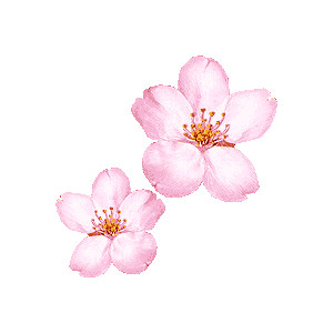 Blossom clipart #15, Download drawings