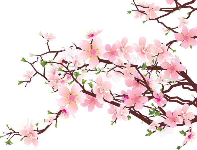 Ume Blossom clipart #11, Download drawings