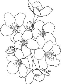 Ume Blossom coloring #18, Download drawings