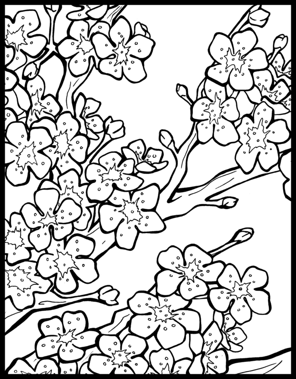 Sakura Tree coloring #13, Download drawings