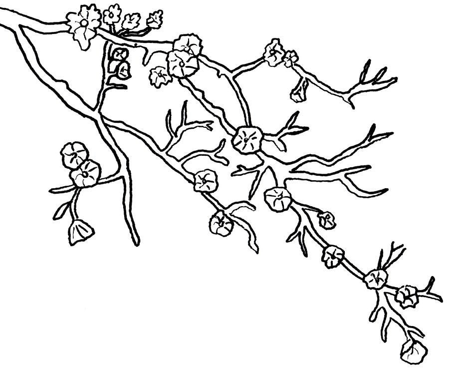 Sakura Tree coloring #10, Download drawings
