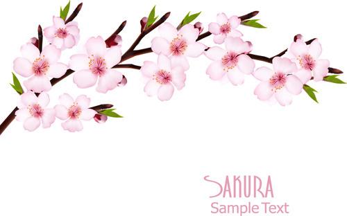 Sakura Blossom svg #1, Download drawings