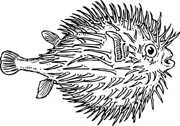 Blowfish clipart #6, Download drawings