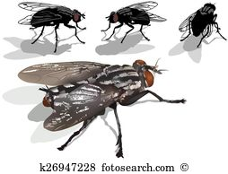 Blowfly clipart #10, Download drawings