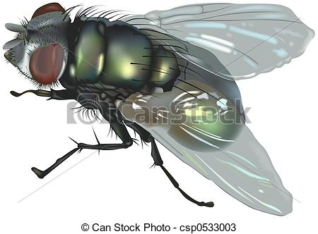 Blowfly clipart #4, Download drawings