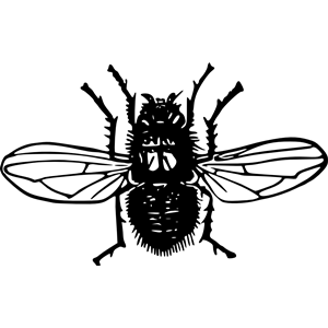 Blowfly clipart #20, Download drawings