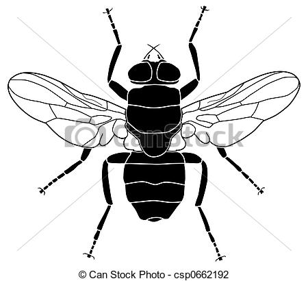 Blowfly clipart #16, Download drawings