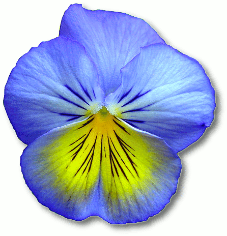 Blue Flower clipart #2, Download drawings