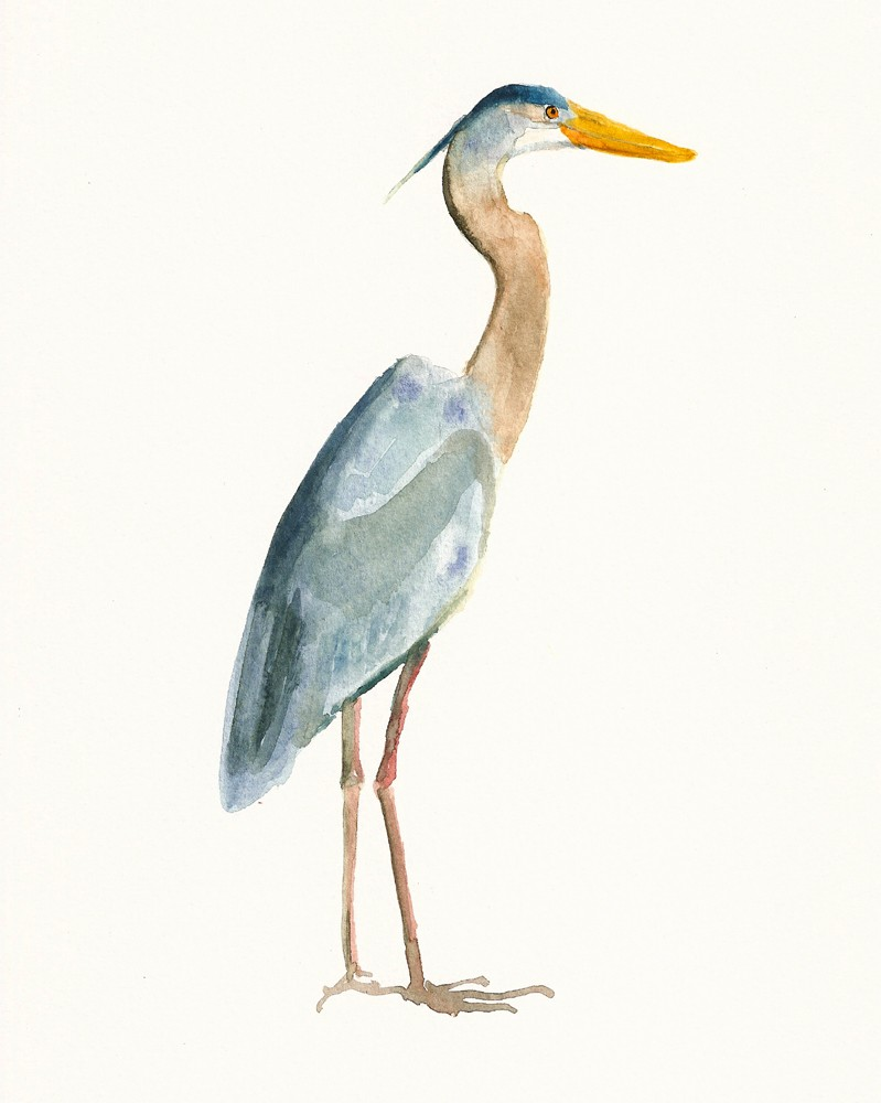 Blue Heron clipart #13, Download drawings
