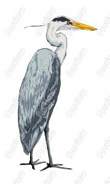 Blue Heron clipart #11, Download drawings