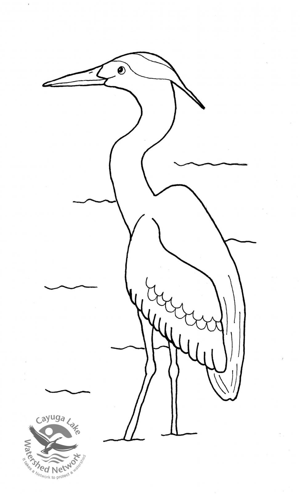 Great Blue Heron coloring #12, Download drawings