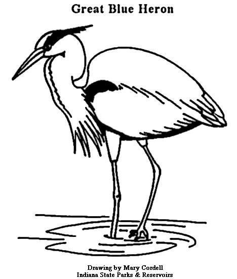 Great Blue Heron coloring #10, Download drawings
