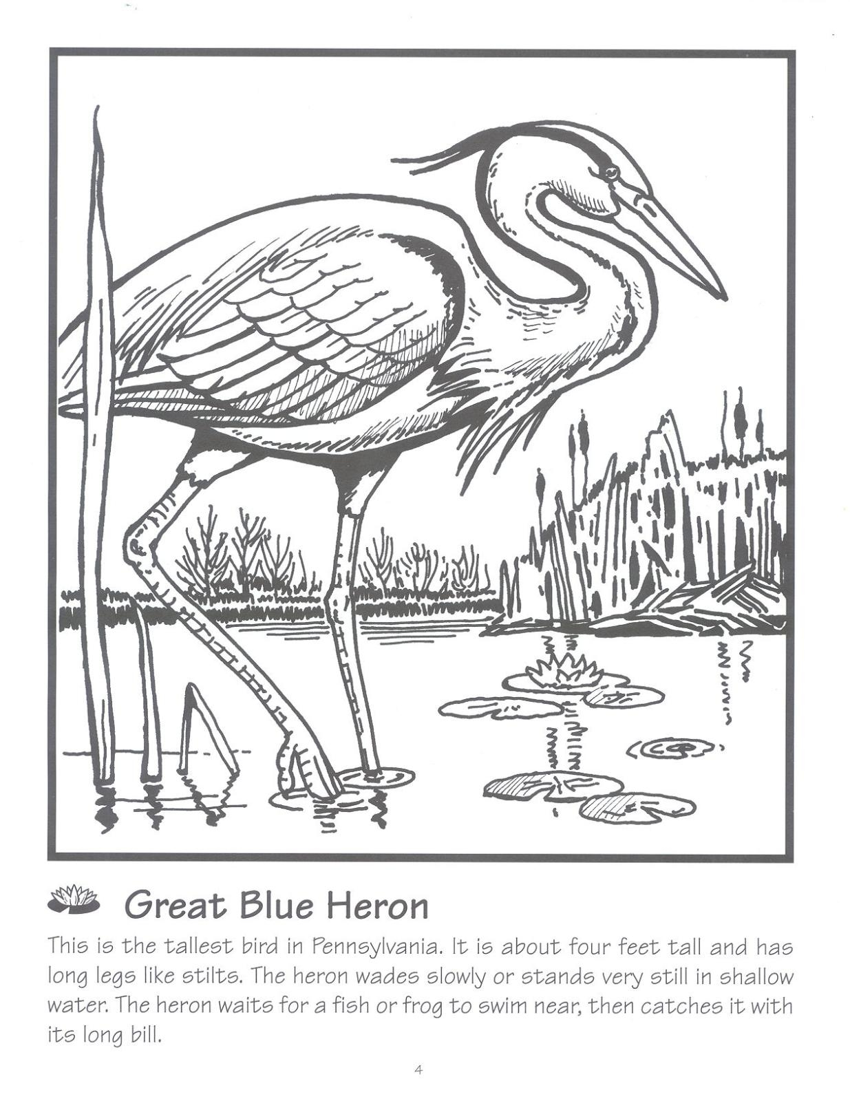 Great Blue Heron coloring #13, Download drawings