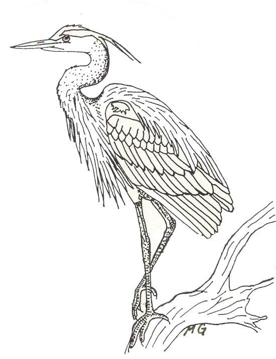 Great Blue Heron coloring #5, Download drawings