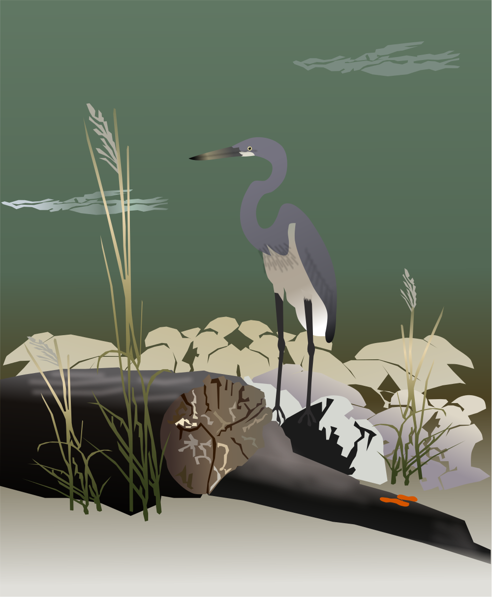 Great Blue Heron svg #10, Download drawings