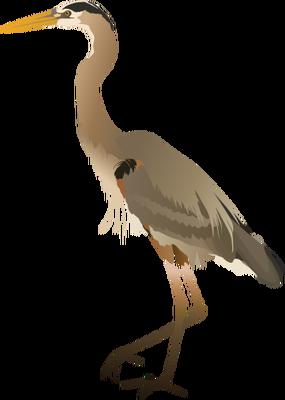 Great Blue Heron svg #19, Download drawings