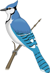 Blue Jay clipart #1, Download drawings