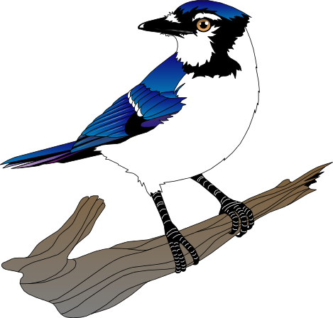 Blue Jay clipart #6, Download drawings