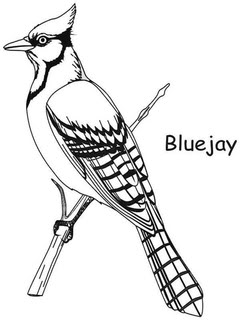 printable coloring pages of blue jays | Blue Jay coloring, Download Blue Jay coloring for free 2019