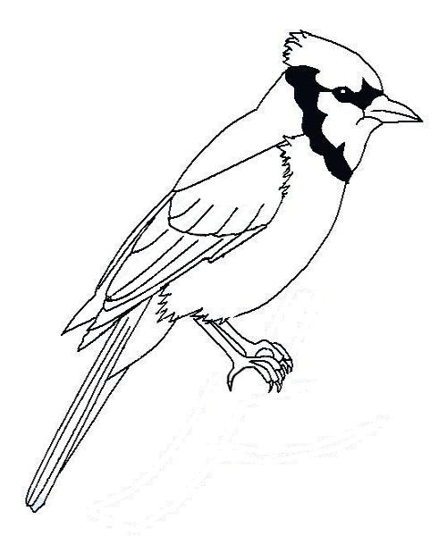 Blue Jay svg #13, Download drawings