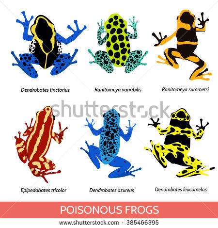 Blue Poison Dart Frog clipart #6, Download drawings