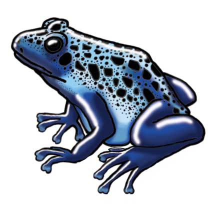Blue Poison Dart Frog clipart #12, Download drawings