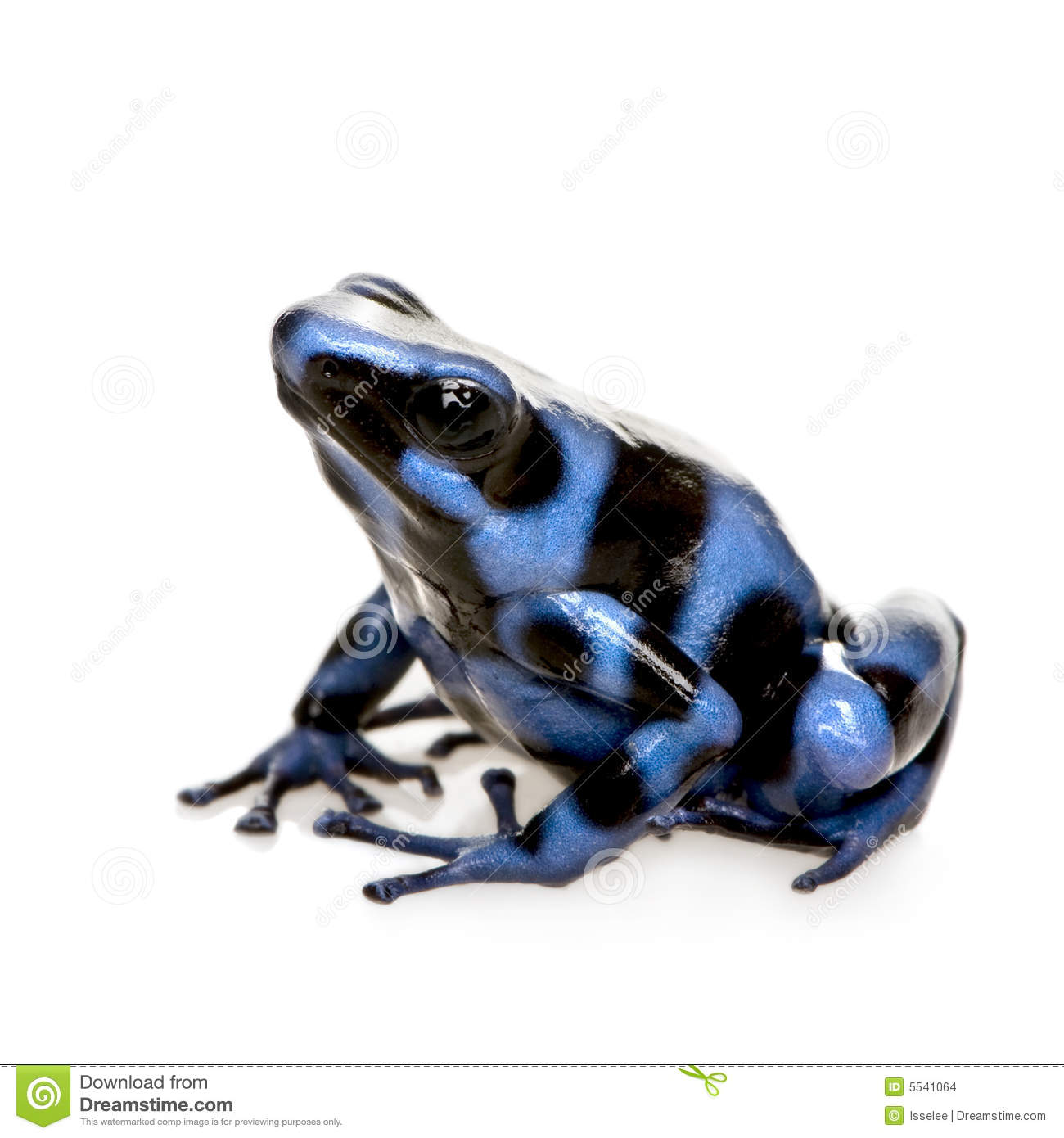 Blue Poison Dart Frog clipart #5, Download drawings