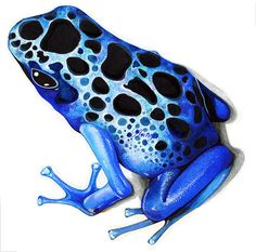 Blue Poison Dart Frog clipart #19, Download drawings