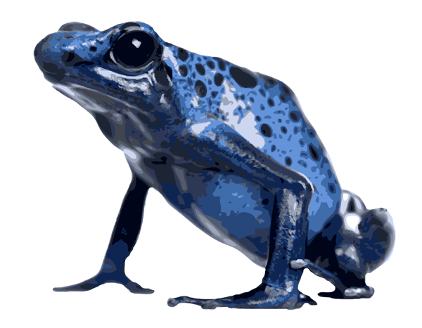 Blue Poison Dart Frog clipart #18, Download drawings