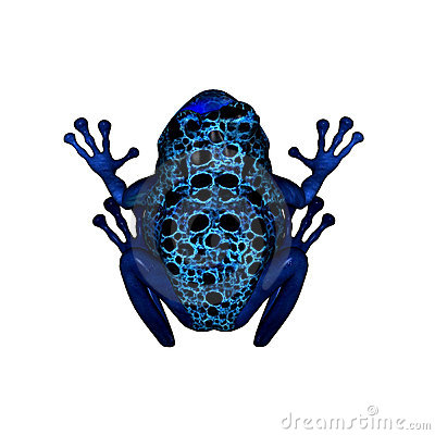 Blue Poison Dart Frog clipart #16, Download drawings