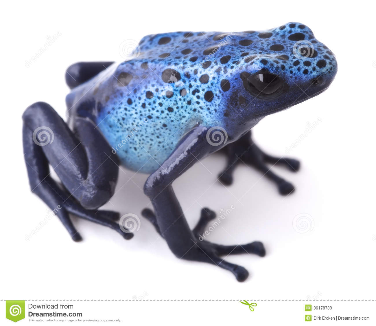 Blue Poison Dart Frog clipart #15, Download drawings