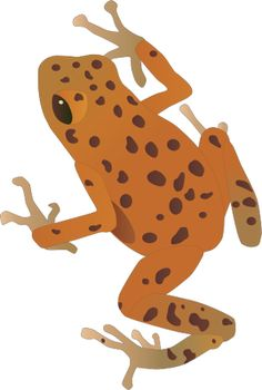 Golden Poison Frog svg #3, Download drawings