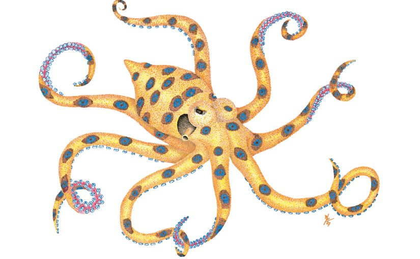 Blue Ringed Octopus clipart #3, Download drawings