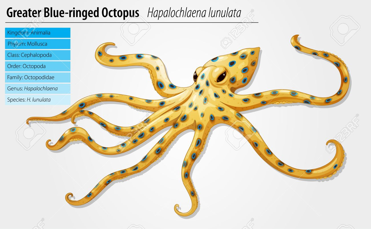 Blue Ringed Octopus clipart #12, Download drawings