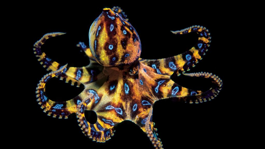 Blue Ringed Octopus svg #20, Download drawings