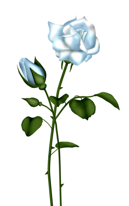 Blue Rose clipart #20, Download drawings
