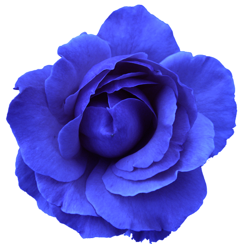 Blue Rose svg #9, Download drawings