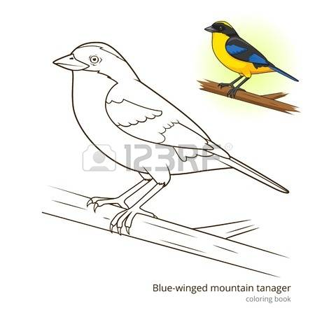 Blue Tanager clipart #15, Download drawings