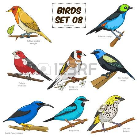 Blue Tanager clipart #10, Download drawings