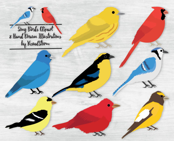 Blue Tanager clipart #12, Download drawings