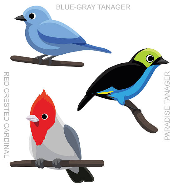 Blue Tanager clipart #19, Download drawings