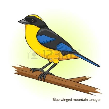 Blue Tanager clipart #18, Download drawings