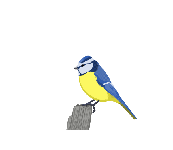 Blue Tit clipart #17, Download drawings
