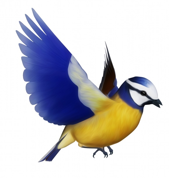 Blue Tit clipart #16, Download drawings
