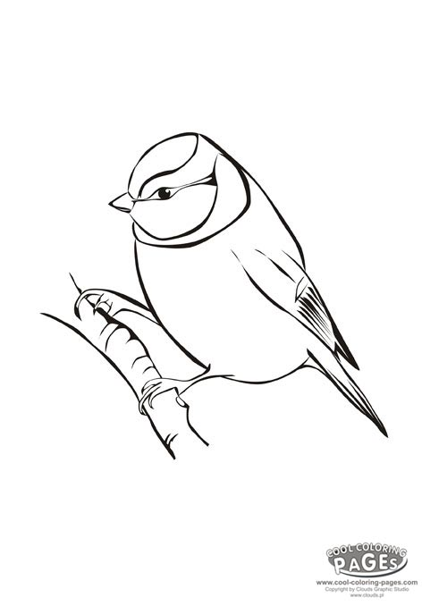 Blue Tit coloring #3, Download drawings