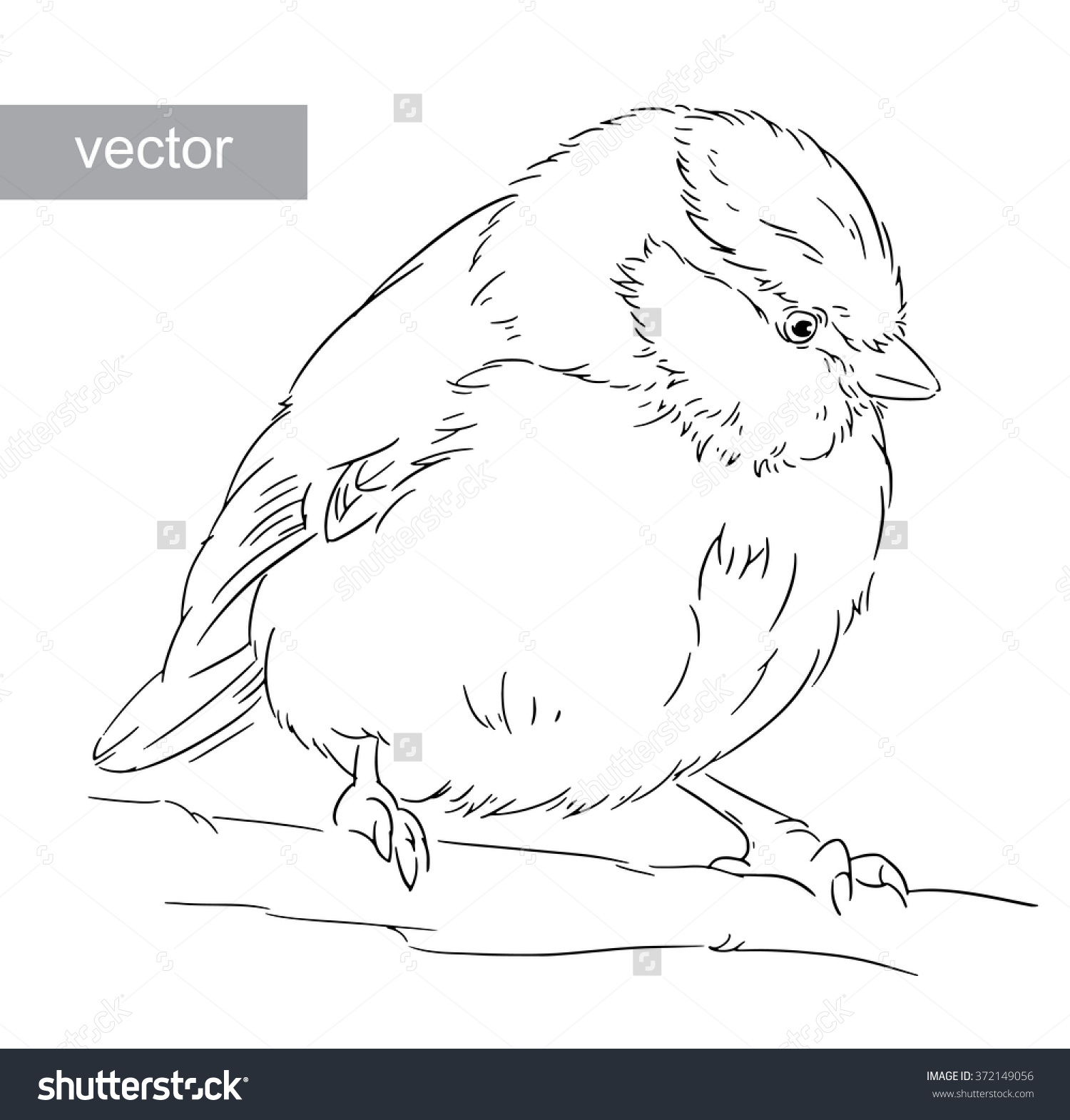Blue Tit coloring #9, Download drawings