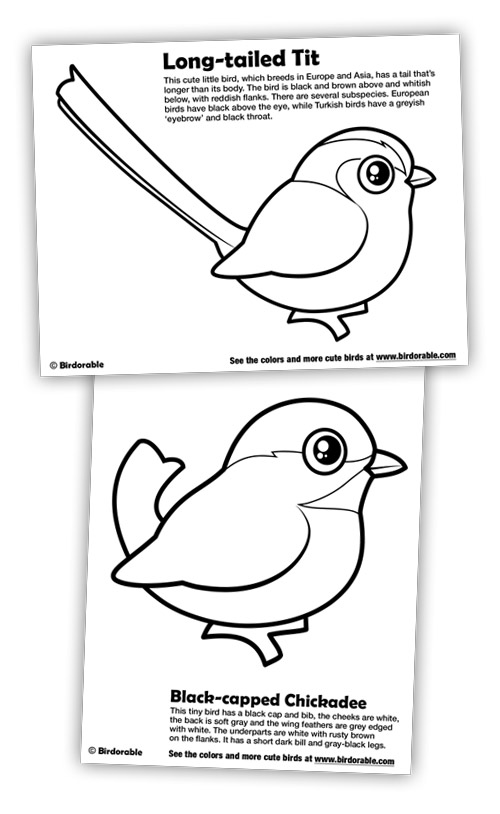 Blue Tit coloring #6, Download drawings
