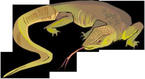 Blue Tongue Lizard clipart #7, Download drawings
